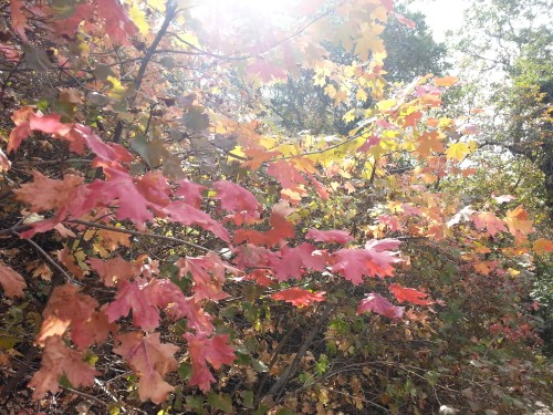 4_Fall in Utah_1